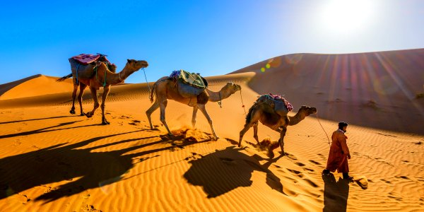 String of camels in Morocco with local guide