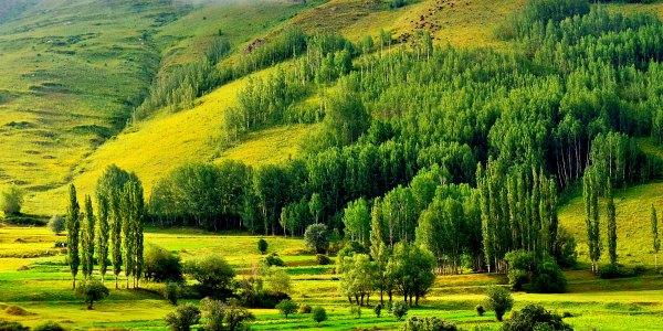 Green landscape in Europe