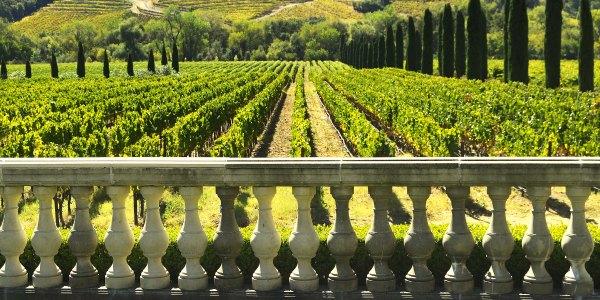Winery in Europe tour with Trafalgar