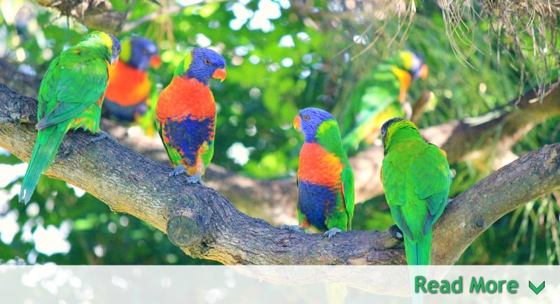 Brightly colored group of birds on branch